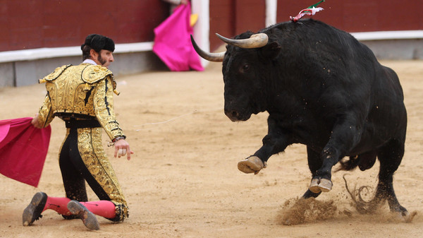 Spanish matador Juan Jose Padilla performs a pass on a bull during San Isidro bullfight festival at Las Ventas bullring in Madrid on May 13, 2015.     AFP PHOTO/ ALBERTO SIMON