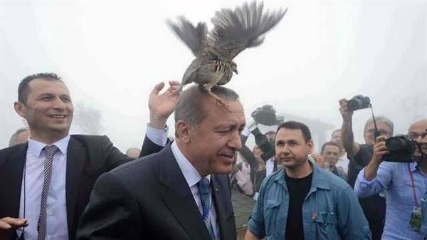 طائر فوق رأس أردوغان