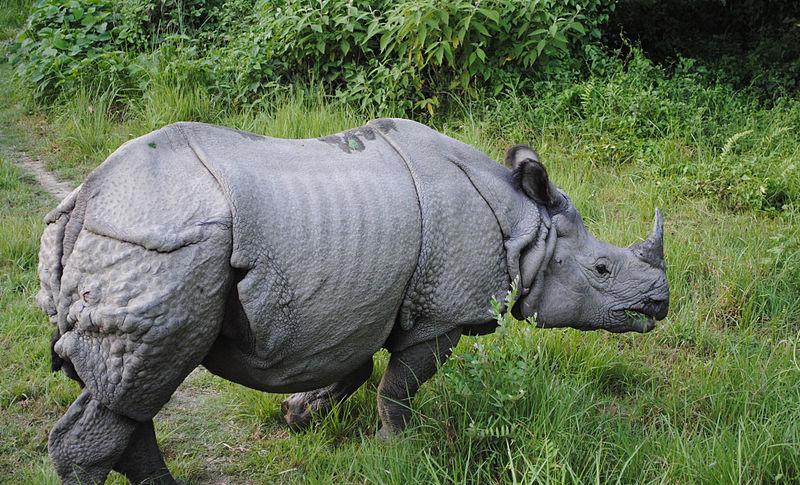 وحيد القرن1