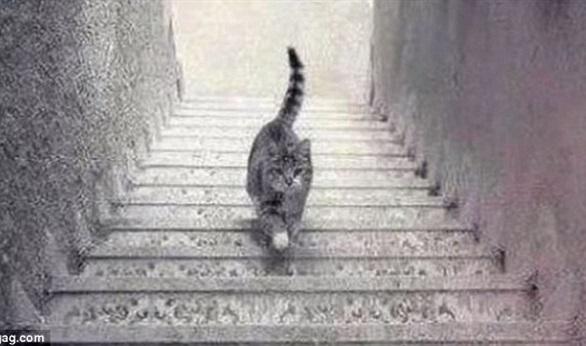 هل تصعد القطة الدرج أم تنزل منه؟
