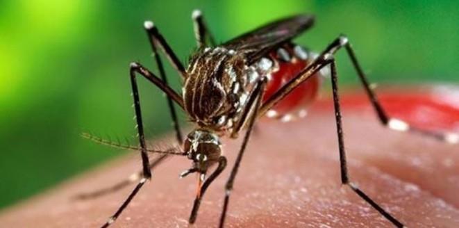 كل ما تريد معرفته عن (فيروس زيكا).. سؤال وجواب Zika-Virus