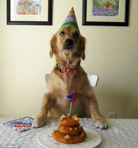 كلب يحتفل بعيد ميلادة
