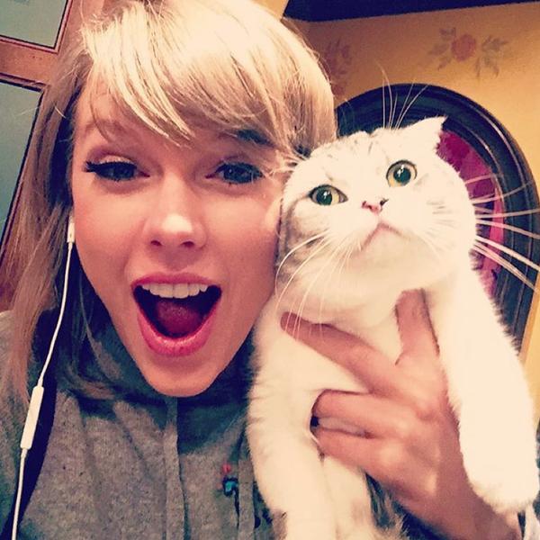 تصوير سيلفي مع القطط - قط - فتاة