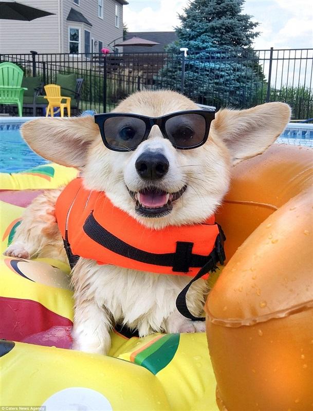 الكلب الأكثر سعادة في العالم