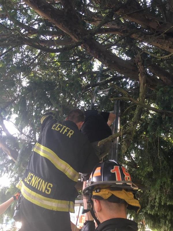 امرأة تحشر نفسها في شجرة أثناء لعب «بوكيمون»