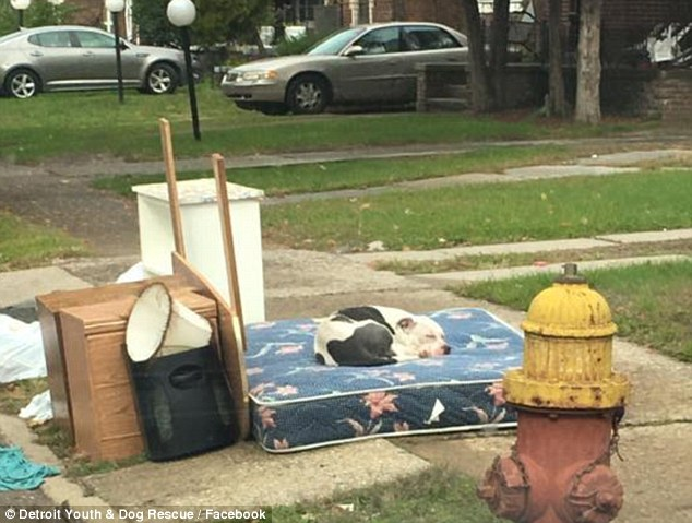 كلب يشعل «فيس بوك» بعد تخلى مالكه عنه