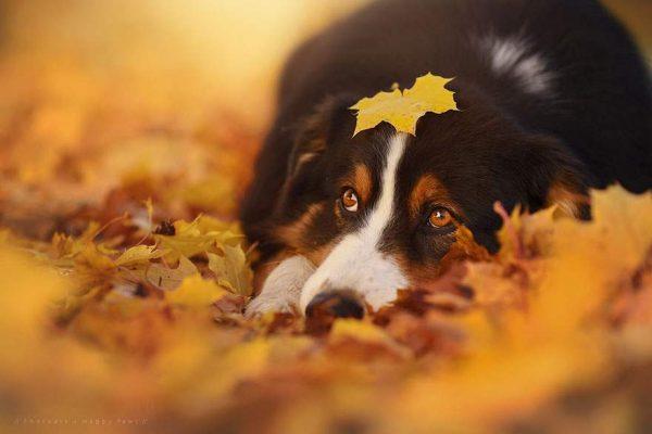 autumn dog photography anne geier 12