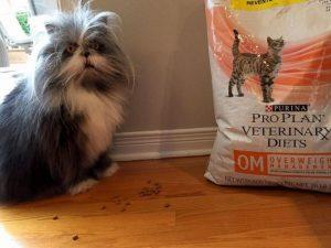 قطة ام كلب