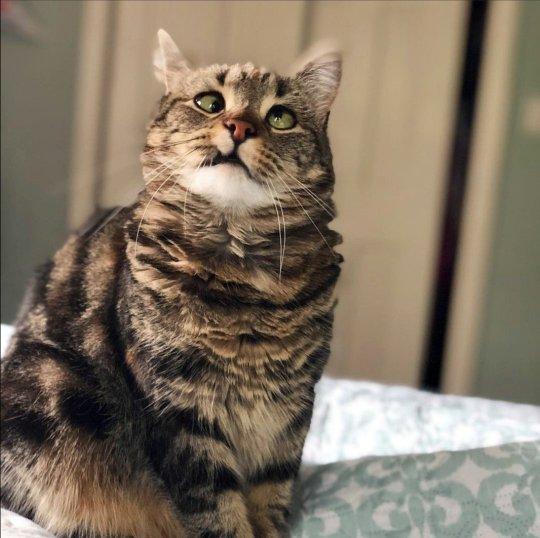 قطة حولة