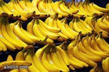سنار  : تنتج 70% من الموز بالسودان