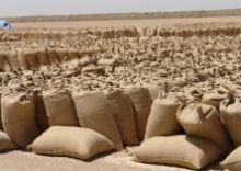 السودان : أسعار المحاصيل بأسواق القضارف