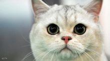 """قطة """"قطعت"""" الكهرباء أثناء انتخابات تركيا"""