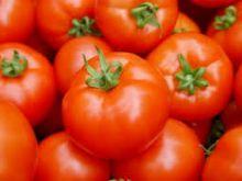 تلوث بصري وتحذيرات من تناول طماطم البيوت المحمية