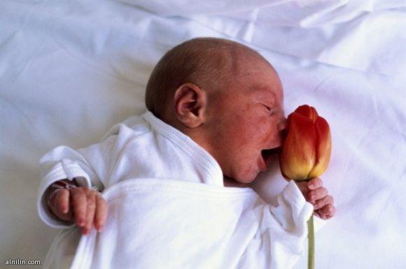 طفل حديث الولادة يشتم رائحة الورد