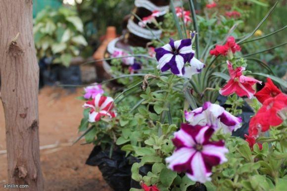 معرض الزهور السنوي - مارس 2013 -  الخرطوم