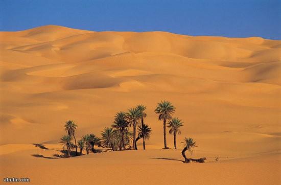 صورة للصحراء الليبية عليها واحة من النخيل