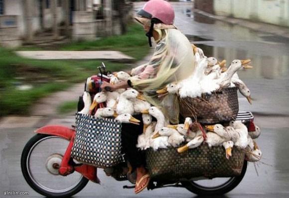 مزرعة دجاج كاملة علي عجلتين