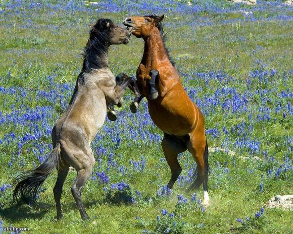 صورة لخيول في طبيعية