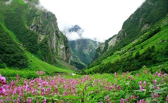 وادي الزهور - على ارتفاع 11,000 قدم في جبال الهيمالايا الغربية يوجد هذا المكان الساحر مختبئاً في أحضان الوادي المغطى بمروج الزهور