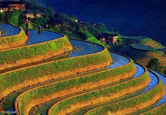 مُدرجات مزارع الأرز في الفلبين: أعجوبة الدنيا الثامنة!