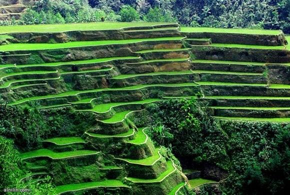 الفلبين - مزارع الارز