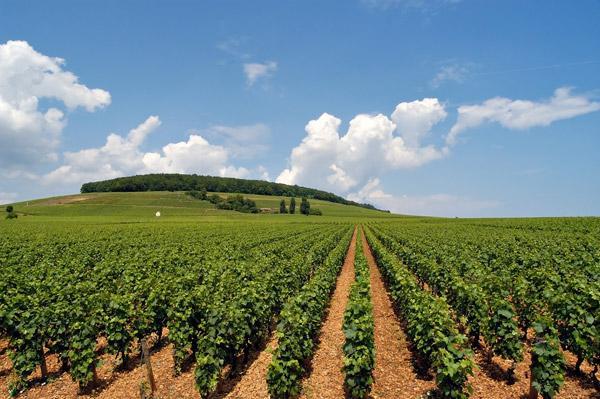 «35» مليون دولار لزراعة القطن بالسودان